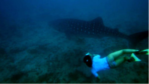 Student capturing the photograph necessary for identifying individual whale sharks.