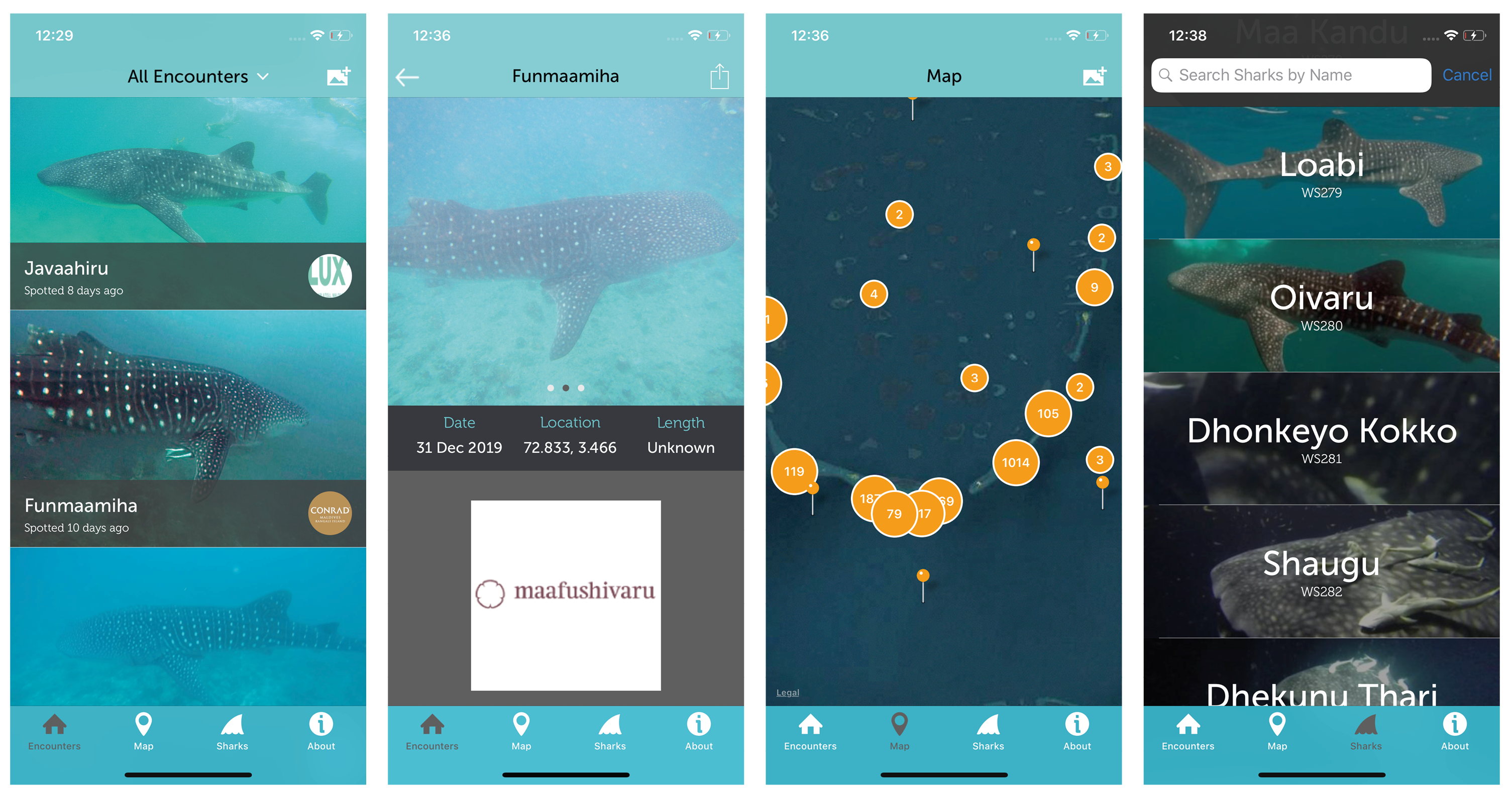 Our App | Maldives Whale Shark Research Programme